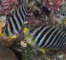 Striped Pair by Mark Rosenstein