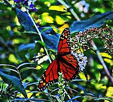 Monarch Butterfly by James Brotherton