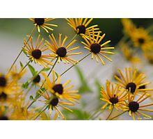 Kentucky Wild Flowers Photographic Print