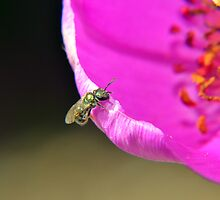 Bug On A Flower Closeup / Macro by Erik Anderson