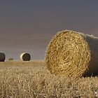 Harvest by NewModelAndy