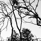 Black Tree On White Sky. by Raymond J. Marcon
