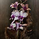 Orchid Still Life  by Pene Stevens