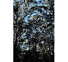 Dawn in the Treetops Photographic Print