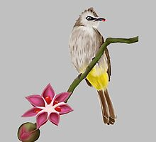 The yellow vented bulbul by maxandtheworld