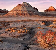 Petrified Forest National Park by Mark Sykes
