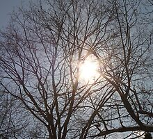 Sun Shining Through Trees by Joy Fitzhorn