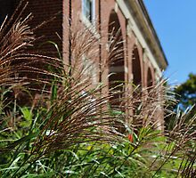 Ornamental Grass and a Building by Gilda Axelrod