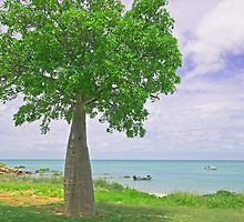Town beach boab tree by Elliot62