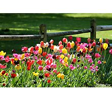 Tulips in the Country Photographic Print