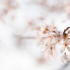 Softly Blossom by Anne Gilbert