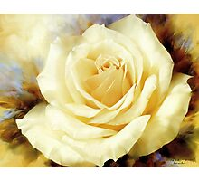 One Champagne Rose  Photographic Print