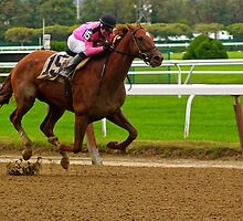 Race Horse Belmont Park, New York by LisaThomasPhoto
