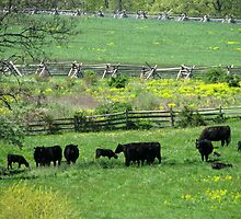 Spring Pastures At Rose Farm, Gettysburg  by AngieDavies