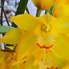 Yellow Orchid by Imagery