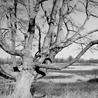 Stately Winter Tree in Black and White by W. Lotus