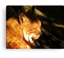 Sleeping Lynx  Canvas Print