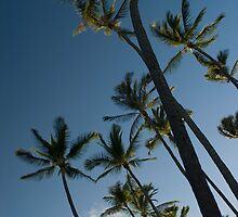 palm trees look up by photoeverywhere