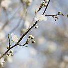 Very Nearly Spring by Anne Gilbert