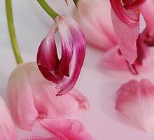 Tulips upside down by RosiLorz