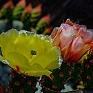 Prickly Pear Cactus by George I. Davidson