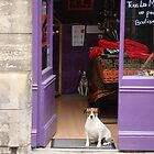 Minding The Shop - Two French Dogs In Boutique by Menega  Sabidussi
