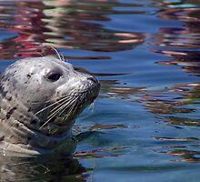 Seal by richtpt