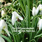 SNOWDROPS (text Psalm 23 v 1) by Shoshonan