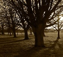 The Great Woods, Felbrigg Hall by Mawddach Photography