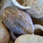 Pile of snail Shells by AthomSfere