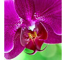 Sweet Orchid by Mary Ann  Lewis