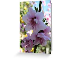 Pastel Shades of Peach Tree Blossom Greeting Card