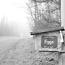 Free Range Eggs, Lancashire by Nick Coates