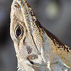 Iguana by AthomSfere