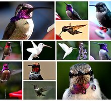 COLLAGE OF HUMMINGBIRDS #2 by JAYMILO
