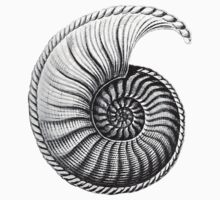 Vintage Ammonite Spiral  by paper-kawaii