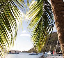 Tortola Palm  by toliveistodie