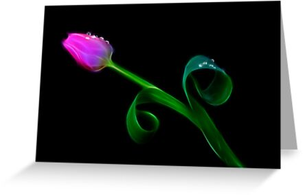 Pink Tulip by Patricia Jacobs CPAGB LRPS BPE3