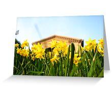 Alexandra Palace Daffodils 1 Greeting Card