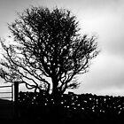 Slemish Fairy tree and stone wall by NiallMcC