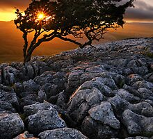 Lone Tree by Mark Sykes