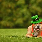 Happy St Patrick's Day! by Kerri Madison