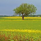 East Yorkshire Rape Field by Kat Simmons
