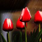 Tulips in the Rain by DeeZ (D L Honeycutt)