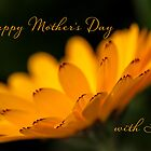 Calendula aglow - Mother's Day by Celeste Mookherjee