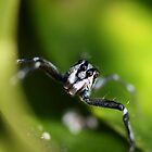 Little Blue Spider by cathywillett