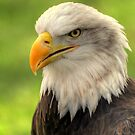 Bald Eagle by larry flewers