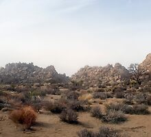 joshua tree deslation by photoeverywhere