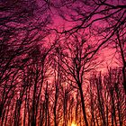 Sunset in the Woods by Thrasivoulos