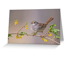 White Throated Sparrow in Spring Greeting Card